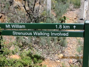 The start on the walking trail to the Mount William summit