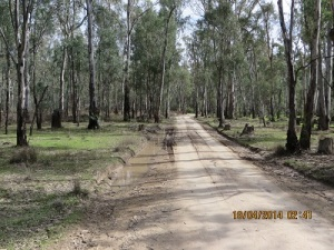 Nursery Track Gunbower National Park