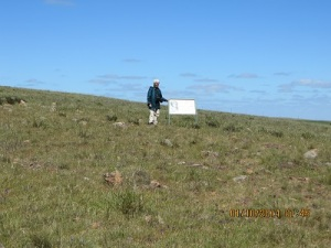 Mokota CP: no trees just grassland