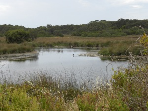 Lagoon near Salt Creek JCD photo