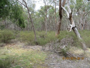My operating position at Brisbane Ranges NP - only footprints left