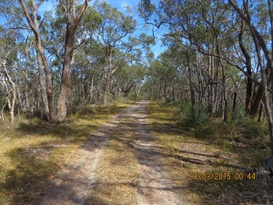 Walking sown Stringybark Track before it gets really steep!