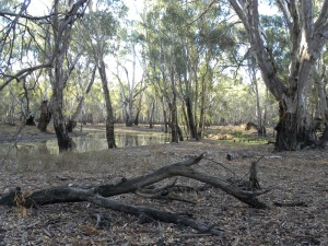 Barmah National Park near my activation spot JCD photo