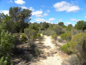 Ngarkat Conservation Park JCD Photo