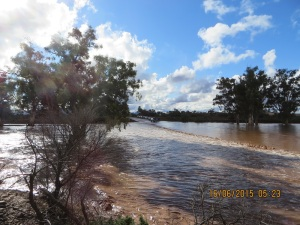 Warriota Creek in flood: VK5PAS got through but we were towing a trailer and decided to camp at Beltana