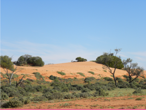 Sand dune on way to Lake Torrens National Park. JCD photo