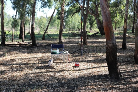 murrumbidgee-np-my-operating-spot-new-growth