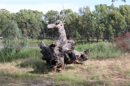 narrandera-stump