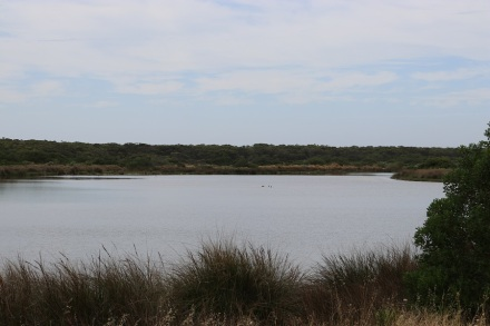 the-coorong-1