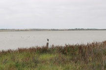 Looking across the Coorong from Younghusband Peninsular