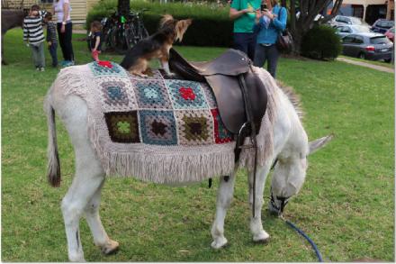 Donkey & Jockey
