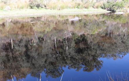 Reflections Buchan River