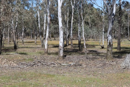 allikar woodland for blog