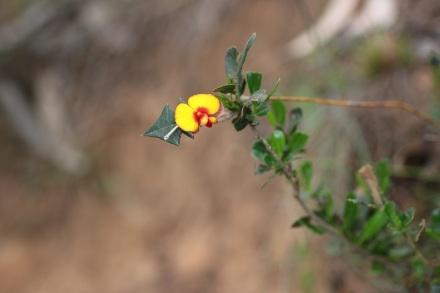 wid flower for blog